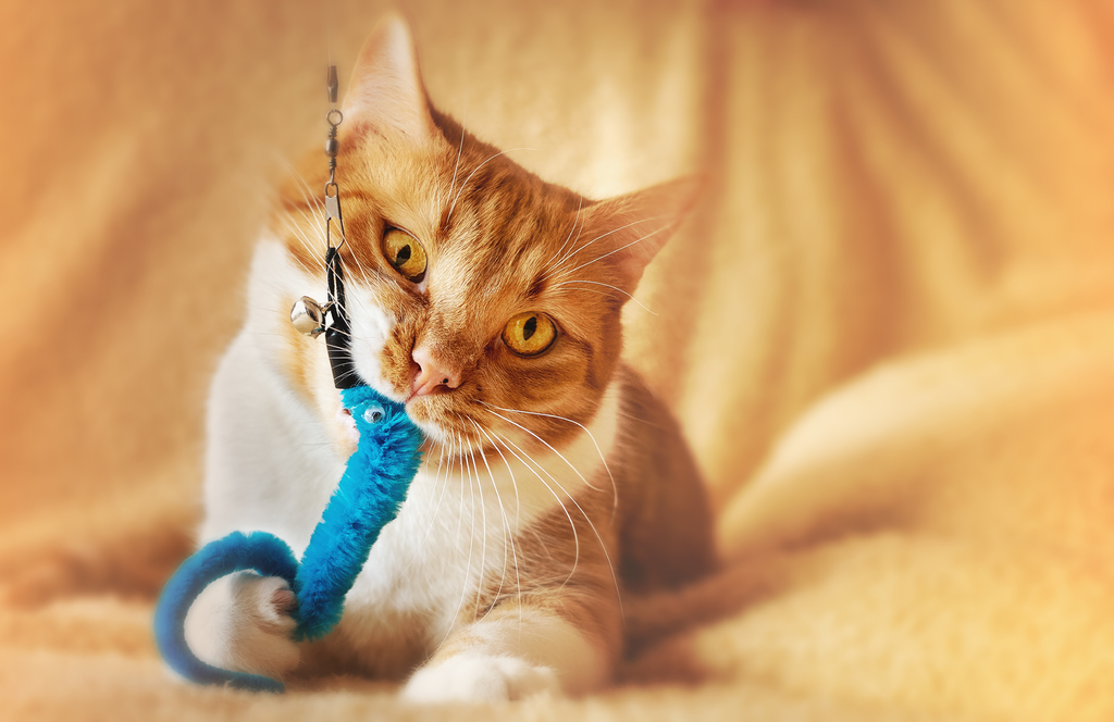 cat toy play
