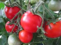 Выращивание овощей в подвале.