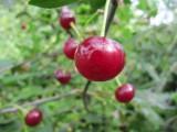 Народные средства защиты растений от вредителей.