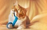 Кошка в твоем доме.