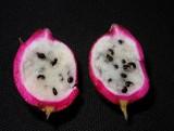 Кактус. Как вырастить плоды в домашних условиях.