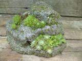 Сады на камнях.