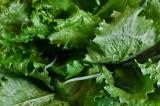 Салат. Лечебные и полезные свойства.