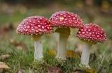 Какие грибы ядовитые ?!