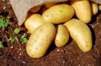 Картофель.Выращивание из семян.