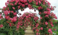 Вьющиеся растения для вертикального озеленения.