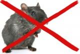 Мыши в квартире, что делать ?