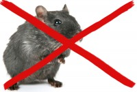 Мыши в доме, что делать ?
